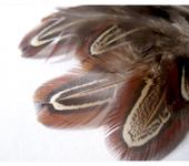 Фурнитура для бижутерии - 5-7см Перья фазана натуральные неокрашенные для творчества