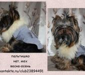 Одежда для собак - Дизайнерская одежда для маленьких собак