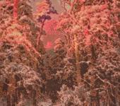 """Вышитые картины - Картина """"В зимнем лесу"""""""