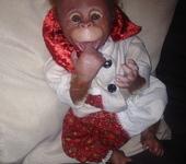 Куклы реборн - Обезьянка Малыш