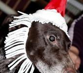 Аксессуары для собак - Новогодний колпак