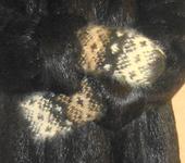 Варежки, митенки, перчатки - варежки из собачьей шерсти